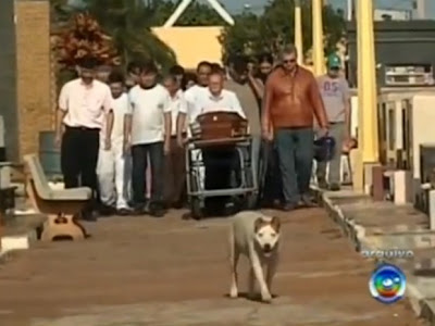 cachorra que acompanhava enterros