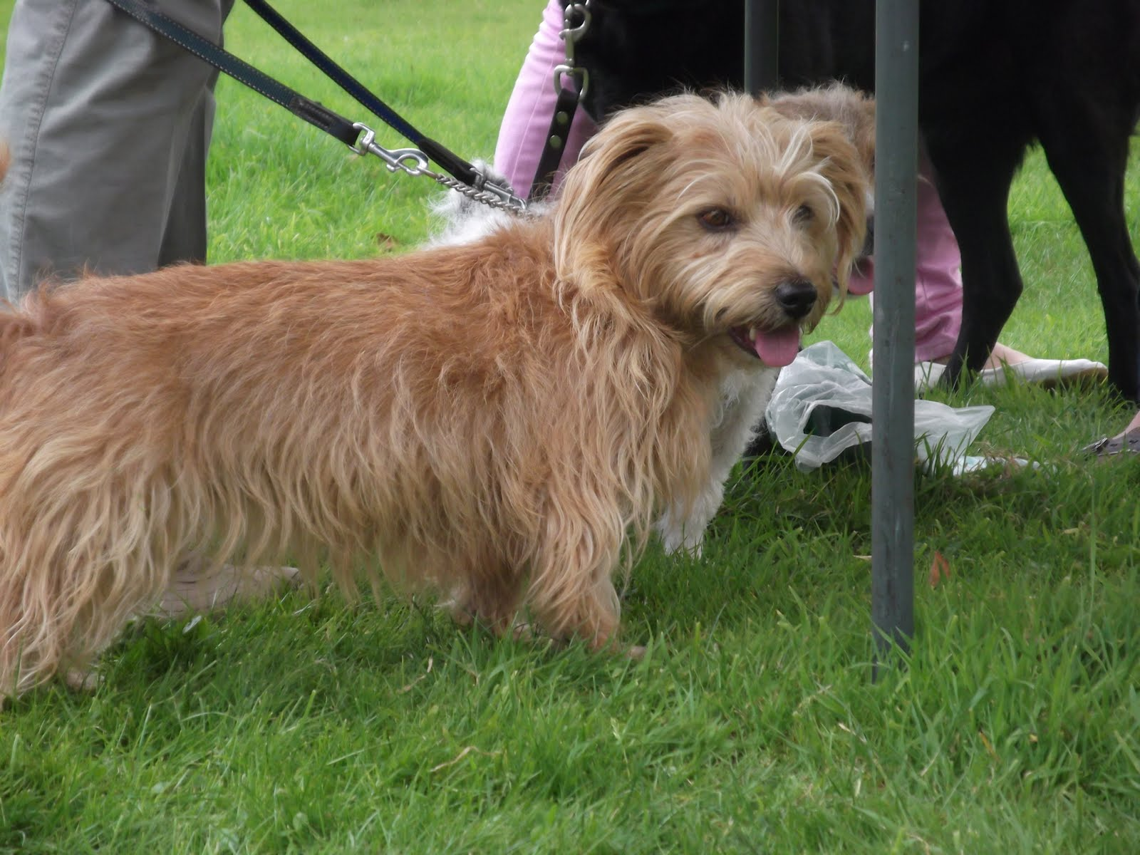 Small Wire Haired Dog Breeds | Dog Breeds Picture