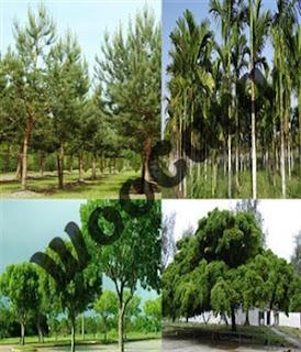 Flora Indonesia Bagian Barat