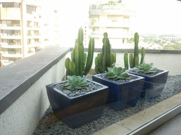 em cuiaba Jardins com plantas do deserto criam paisagismo diferenciado