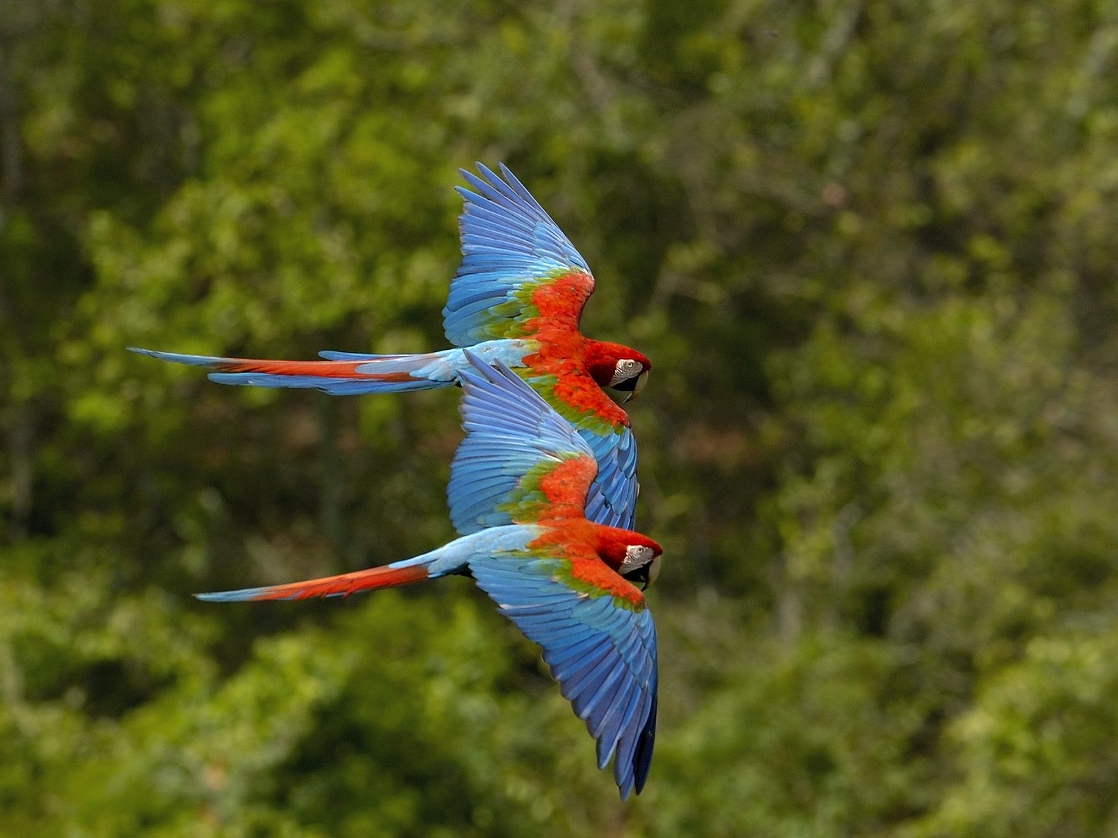 Exotic Birds Flying