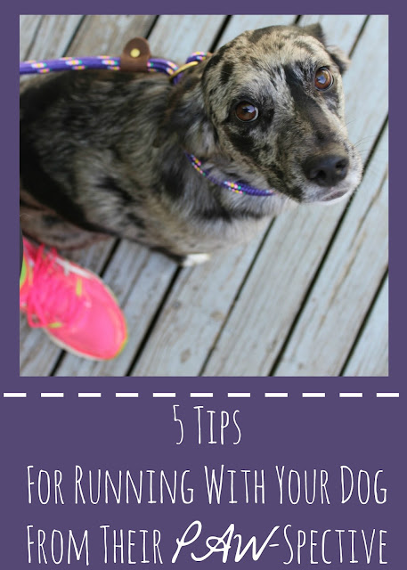 Tips for running with your dog.