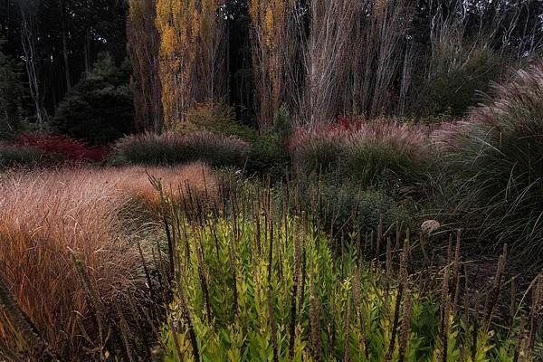 Frogmore Trentham, Prarie Garden