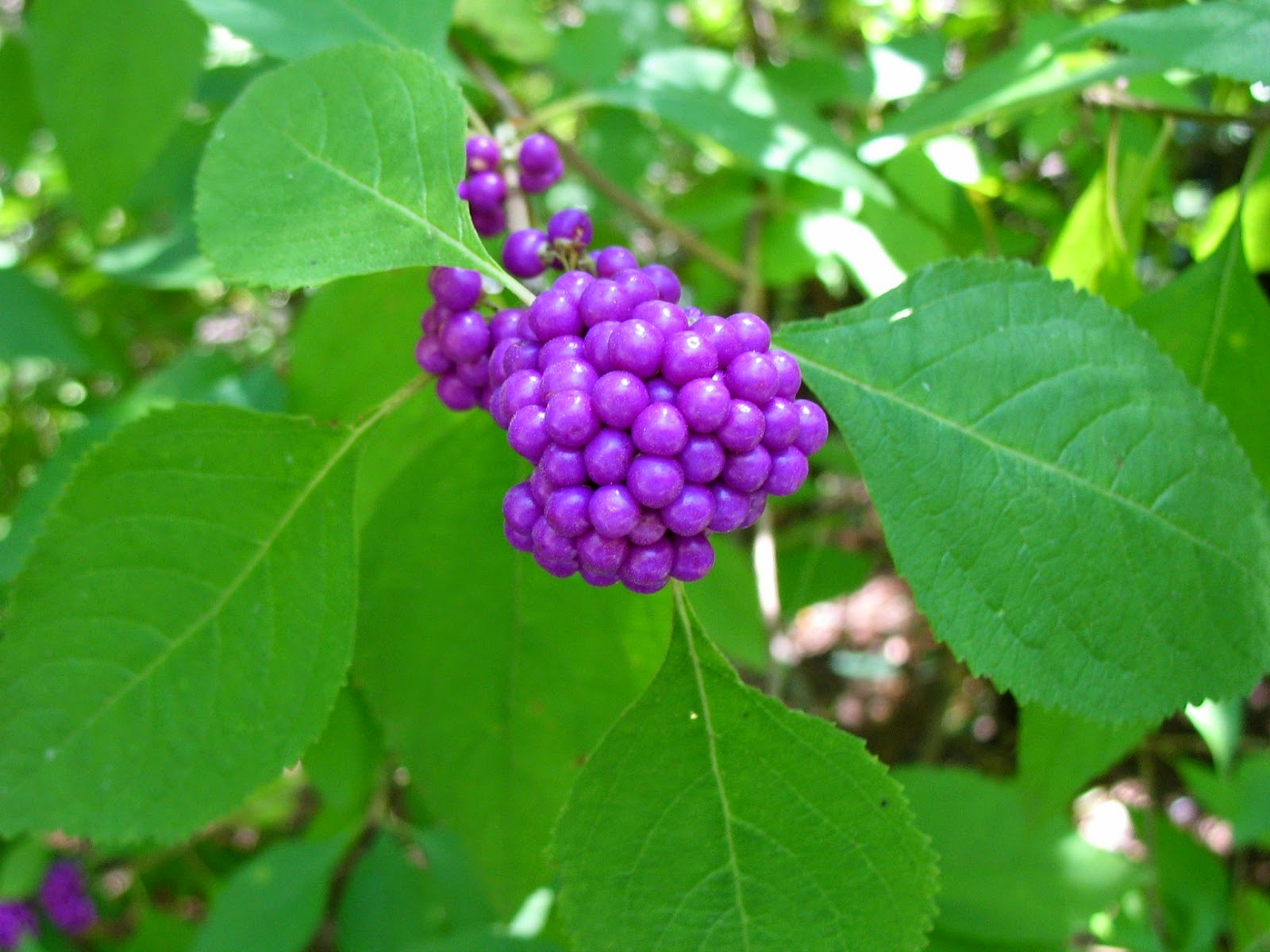 Using Georgia Native Plants Fall Is For Planting And