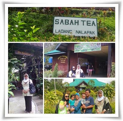 SABAH : @ SABAH TEA GARDEN