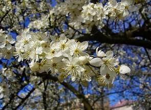 wiosna-za-moim-oknem