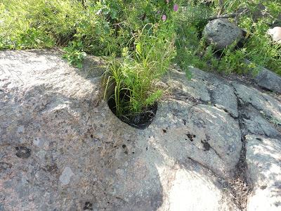 колодец в гранитной скале зарос от времени травой, Южный Буг