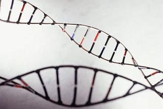 [Imagem: engenhariagenetica_getty.jpg]