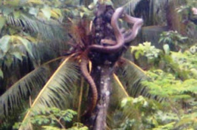 via mileniocaliente.blogspot.com