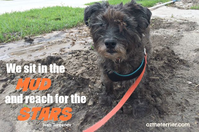 """Oz in the Mud: """"We sit in the mud and reach for the stars"""" -Ivan Turgenev"""