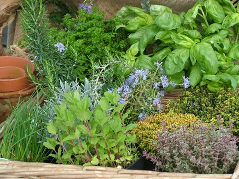 Herbs Herb Gardening Tips 