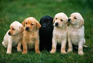 anjing cute