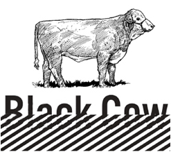 Black Cow Media (Paid) Internships