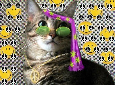 lol cats hippy