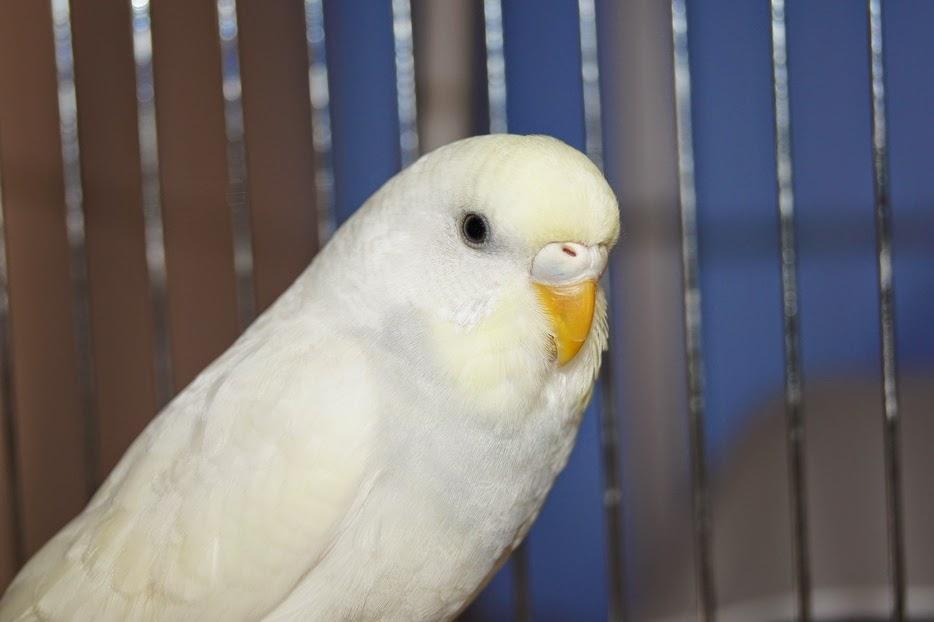 Foto Burung Palek Terbaik