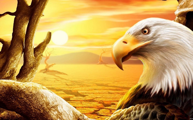 Gypsy magic eagle symbols and meanings eagle symbols and meanings biocorpaavc Choice Image