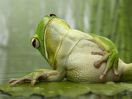 Funny indian frog funny animal - Funny frog pictures ...