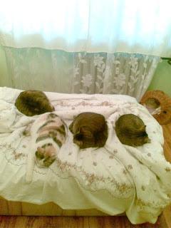Koty śpią tak...