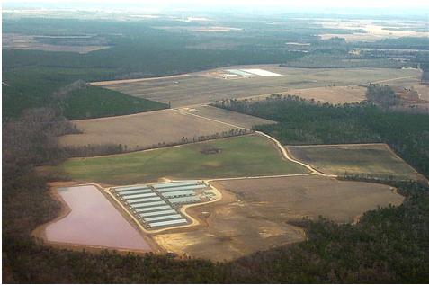 Hình 5: Thiết kế các khu nhà chăn nuôi cự ly trung bình (Nguồn: www.circleranchtx.com)