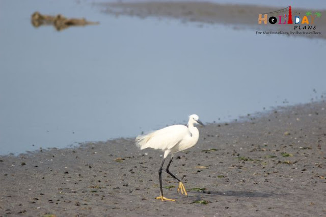 migratory birds in dhanushkodi