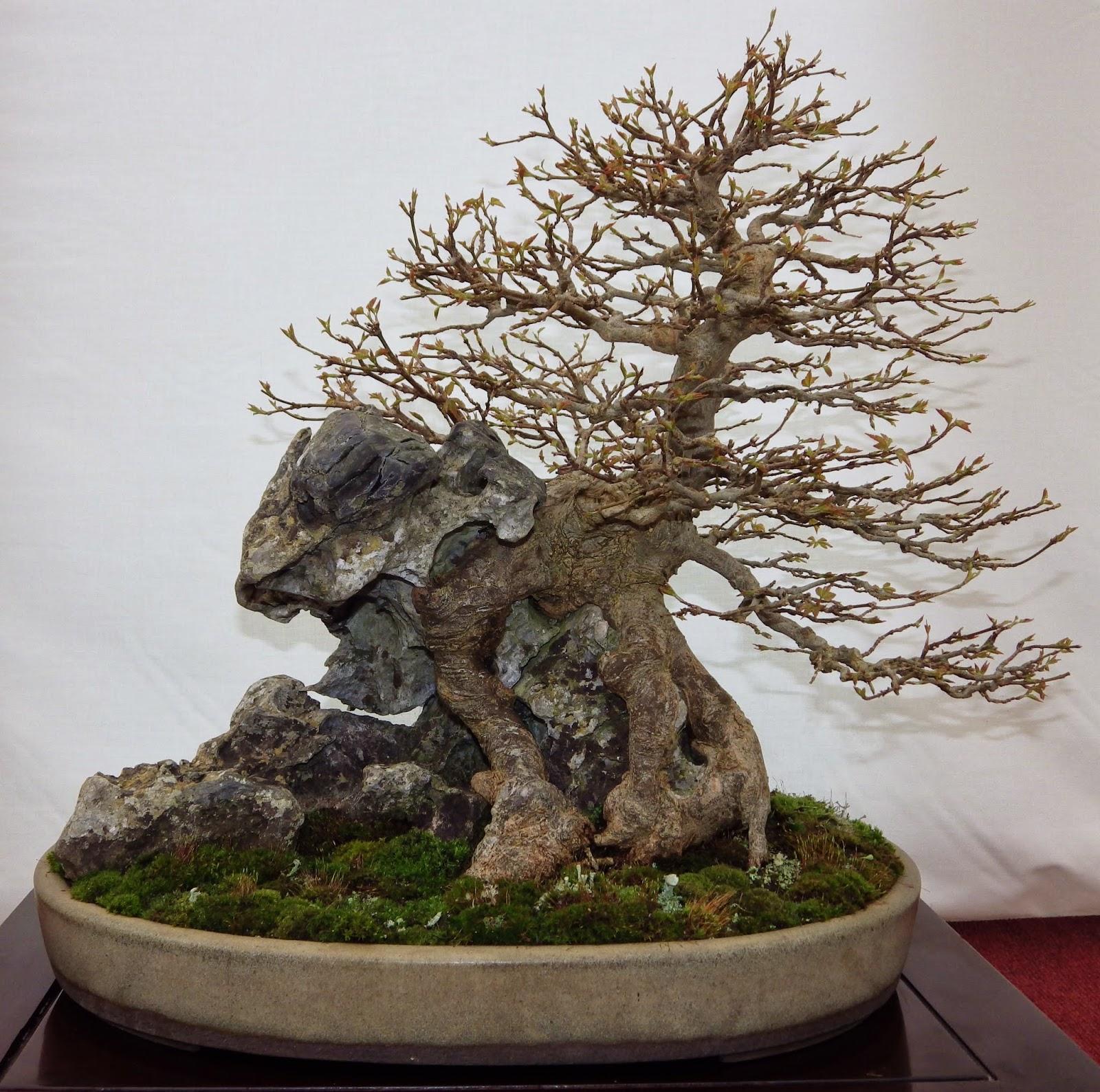 Как сделать дерево бонсай своими руками 35