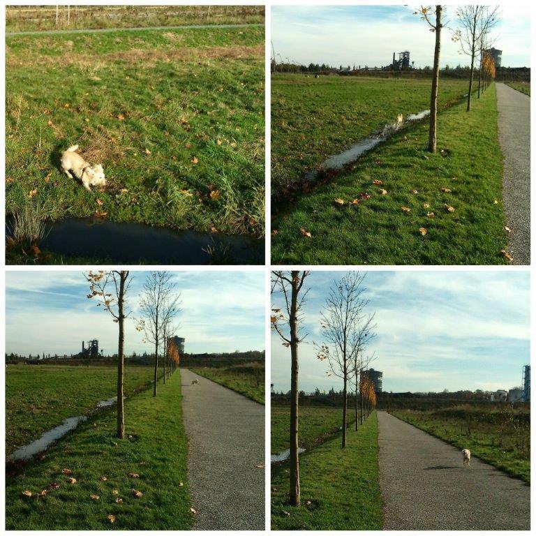 Phönixwest Mina toben spielen rennen Herbst Novemberglück joggen