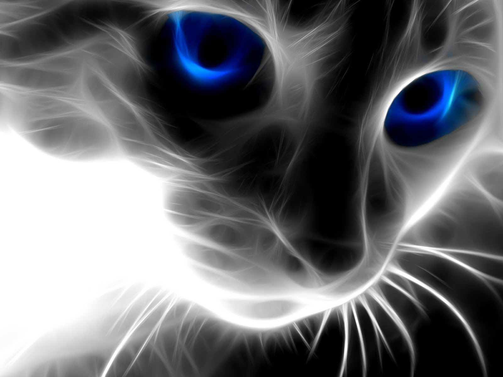 hd cat wallpapers
