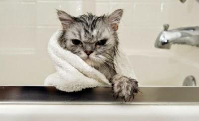 cara-aman-memandikan-kucing_653245