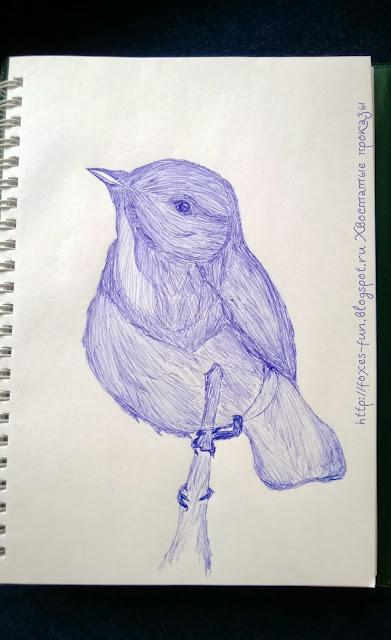певчие птицы рисунок карандашом ручкой пеночка весничка