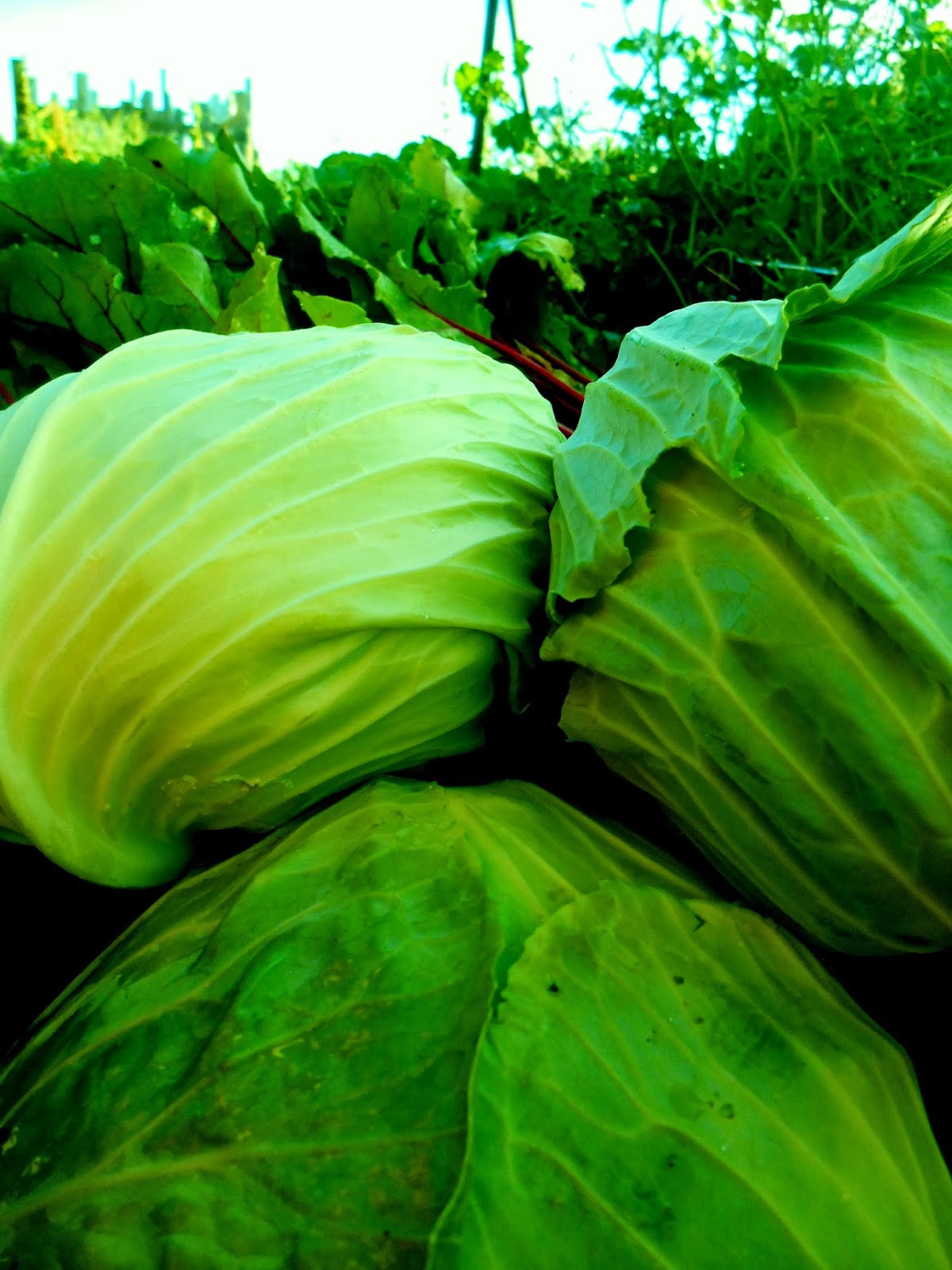how to cook tasty cabbage