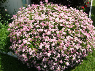 plants that look good all year