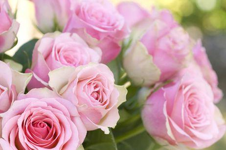 Garden center ejea cuidando nuestros rosales durante el - Flores de verano ...