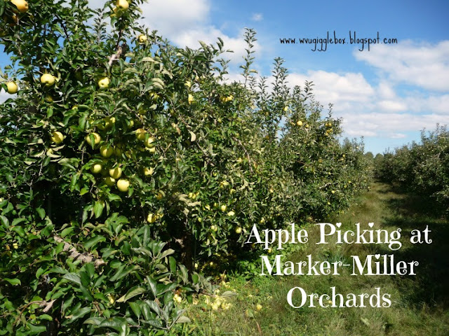 Fall time family fun picking apples at Marker-Miller Orchards in Winchester VA,