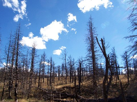 ColoradoCasters: Welcome to Fire Season in Colorado