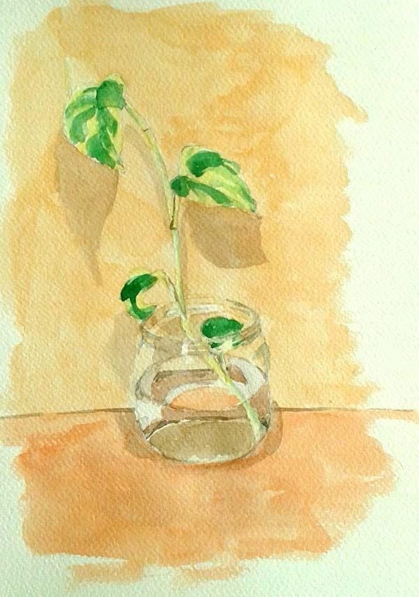 planta en vaso