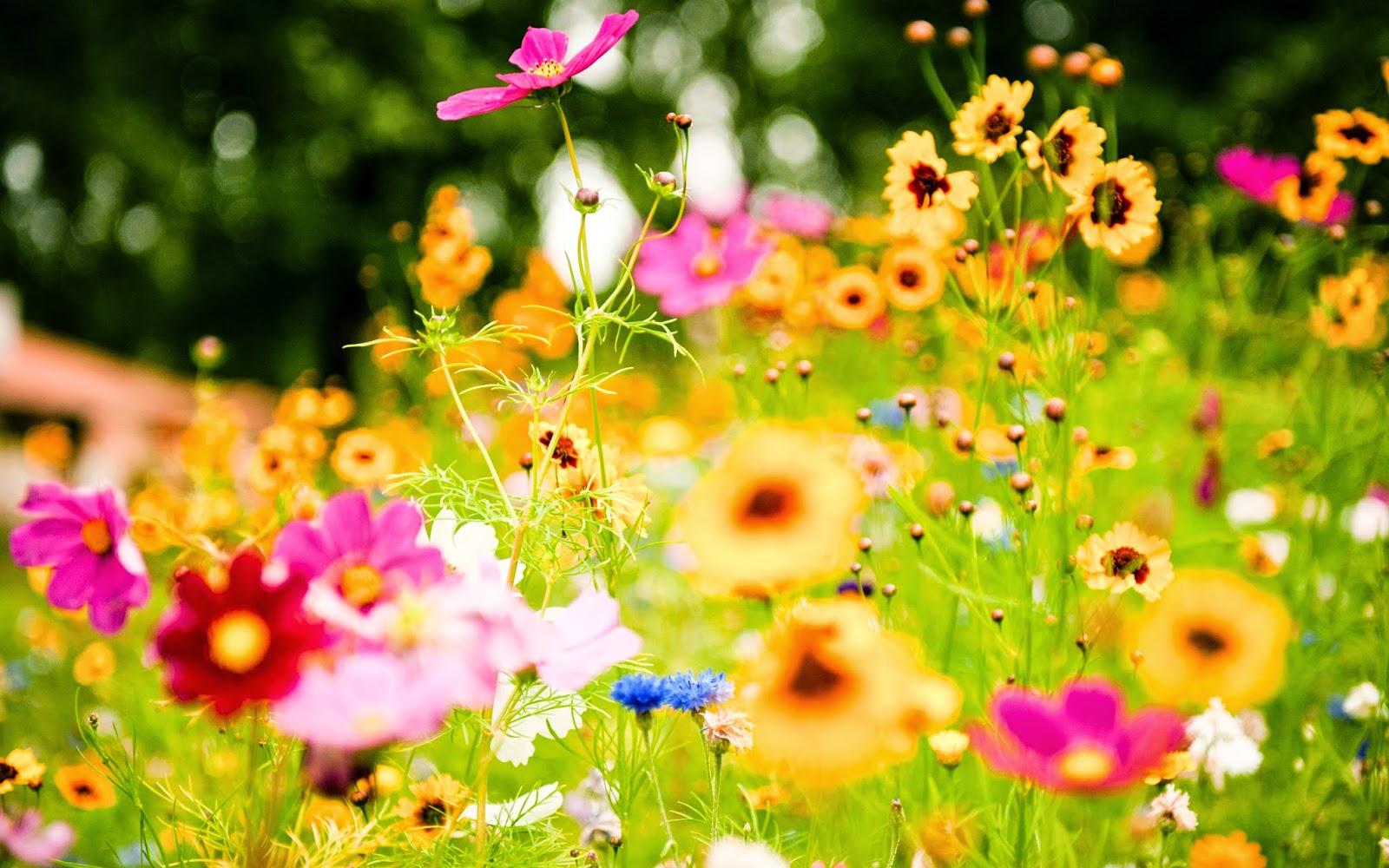 Nume flori