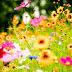 Floriile - Onomastica celor cu nume de flori