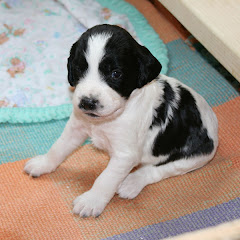 Zinnia at two weeks
