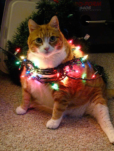 Funny Image Collection Very Creative And Funny Christmas Cat Images