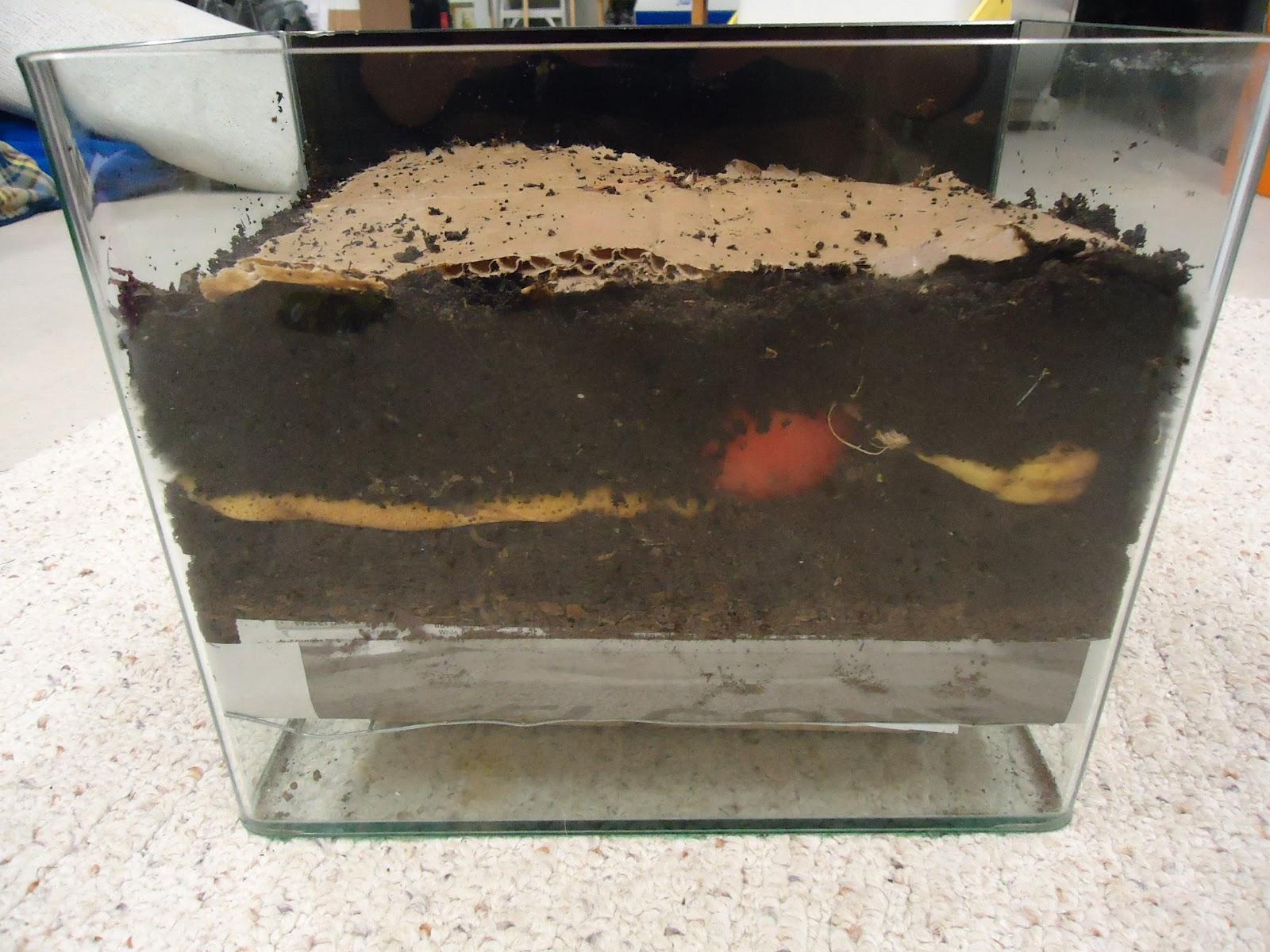 worm bin display