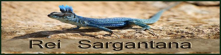 Rei Sargantana