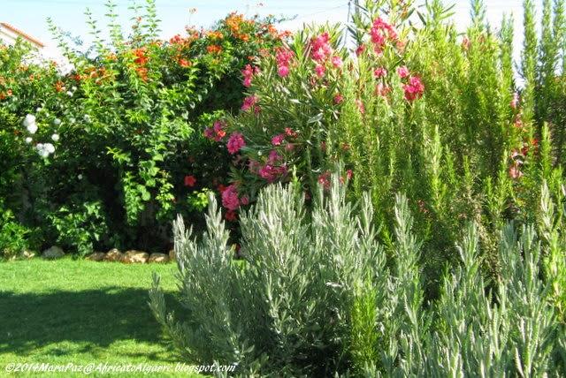 garden long view