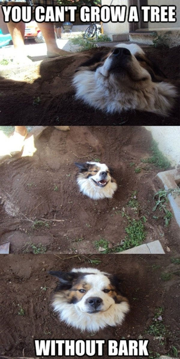 30 Animal pictures with captions, animal captions, animal memes