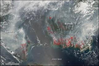 Foto Kebakaran Hutan Terbaru Via Satelit
