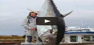 Biggest Tuna