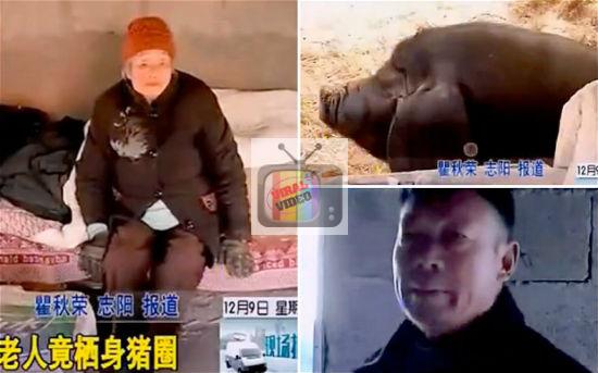 Gambar: Anak Derhaka Letak Ibu Kandung Di Kandang Babi, Manakala Dia Di Rumah Mewah