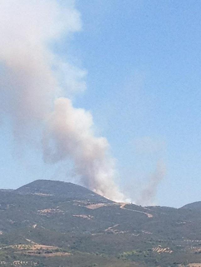 Πυρκαγιές σε δασική έκταση σε Αυλώνα και Δώριο