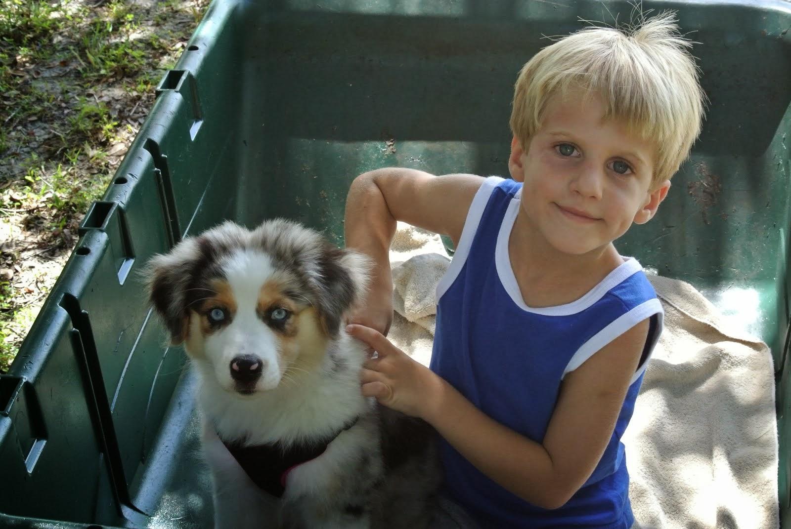 Dog Agility Training Melbourne Fl