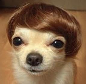 dog cute funny