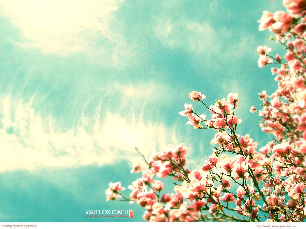 http://4.bp.blogspot.com/-KnUQoLru_4E/Tc29Dagf-oI/AAAAAAAAADk/NWQsfSWhMwg/s1600/flor_caeli__by_matkraken.jpg